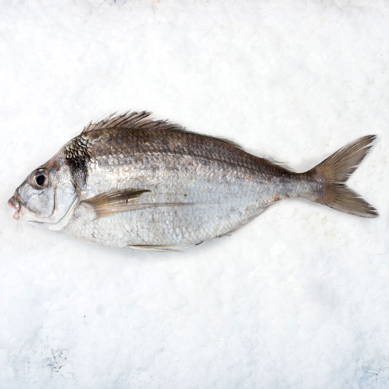 how to cook tarakihi fish nz